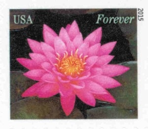 www.usstampgallery.com >> US Postage Stamp >> Water Lily